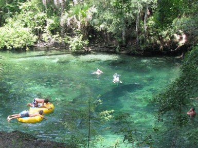 Image result for nature adventures blue spring park